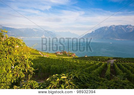 Vineyards Of The Lavaux Region,switzerland