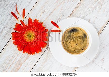 Orange Colorful Gerbera Flowers