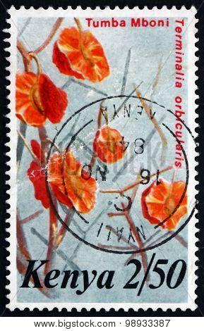 Postage Stamp Kenya 1983 Terminalia Orbicularis
