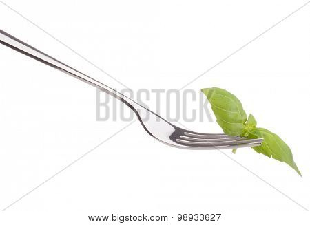 Fresh basil leaf  on fork isolated on white background cutout. Healthy eating concept.
