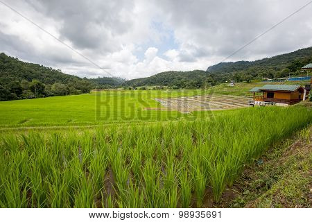 Terraced rice fields in Ban Mae Klang Luang Chiangmai ,Thailand.