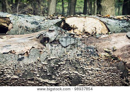 Fallen Tree Trunk Overgrown With Mushrooms