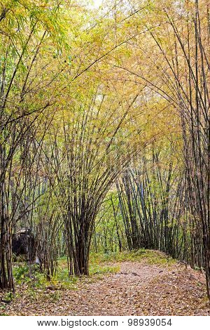 Bamboo Autumn
