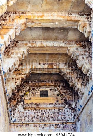 Bats Inside Golden Fort Of Jaisalmer, Rajasthan India