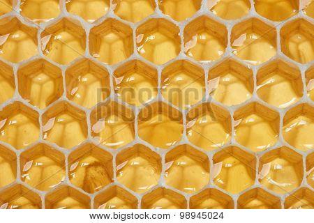 Macro Of Backlit Honeycomb