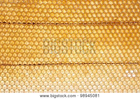 Backlit Honeycomb