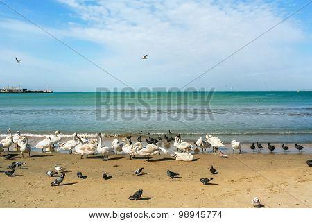 Birds On A Sea Beach On A Spring Day