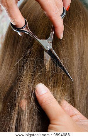 Hands Of Hairdresser Cutting Women's Hair