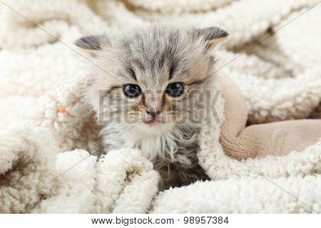 Small Kitten On The Plaid