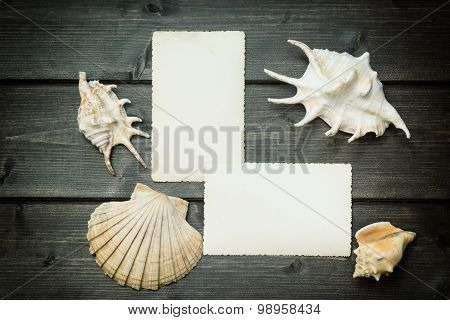 Vintage Photo Of Blank Old Photos And Seashells