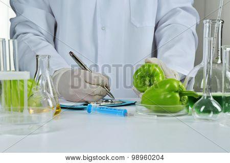 Scientist examines salad pepper in laboratory
