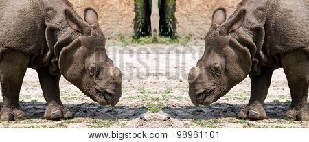 Two Rhinos in a clearing