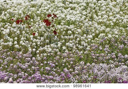 Flowerbed In Garden At Summer