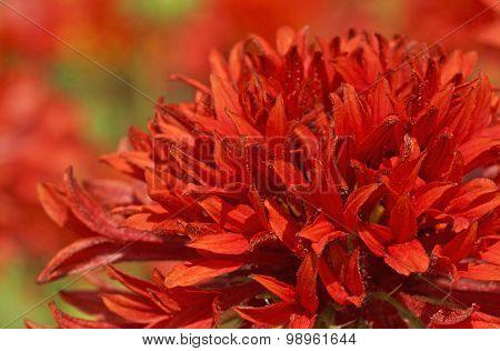 Red Flower In Garden