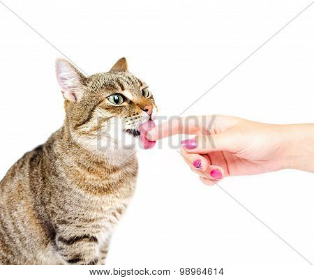Cat Licking A Finger