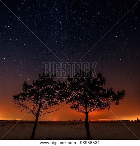Two Trees Are Growing Together On The Background Of The Starry Sky And The Milky Way.