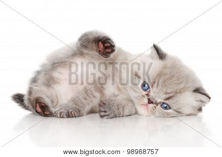 Kitten Lying On White Background