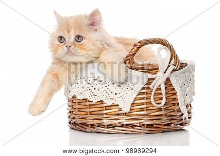 Ginger Persian Cat In A Basket