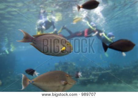 Fishdive