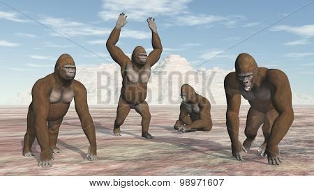 Four Gorillas