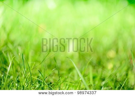 Blurred grass - abstract background, universal use