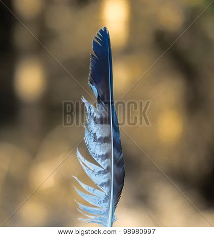 Striped white and grey feather with natural background