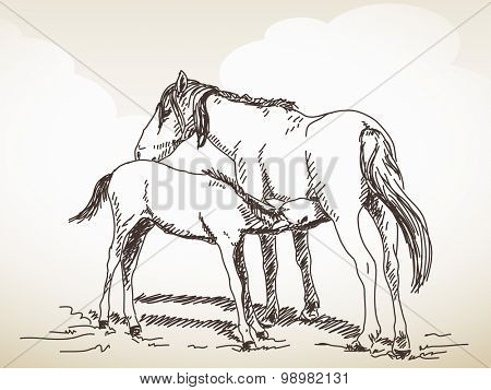 Sketch of the horse, Foal sucks milk, Hand drawn vector illustration