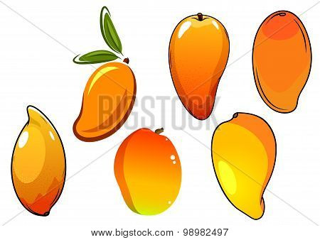Orange fresh tropical mango fruits