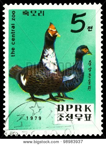 Vintage  Postage Stamp.   Moscovy  Ducks.