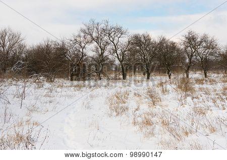 Winter landscape in rural area