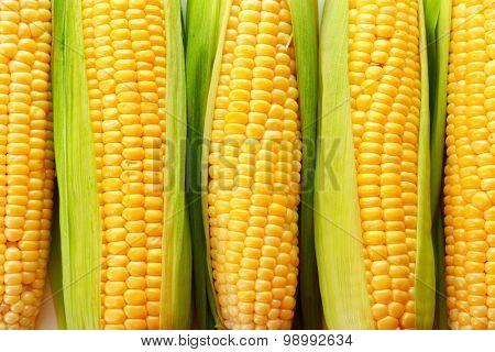 Fresh corn on cob, closeup