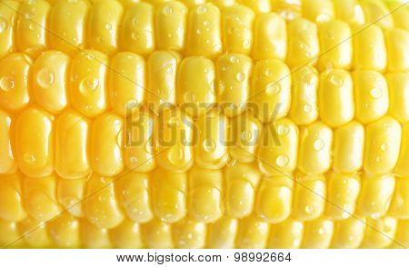 Fresh corn on cob with drops, closeup