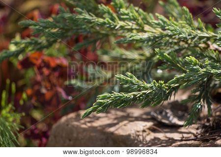Juniper Tree Green Carpet On Multicolor Background