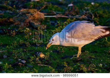 The Gull Has Found The Aim