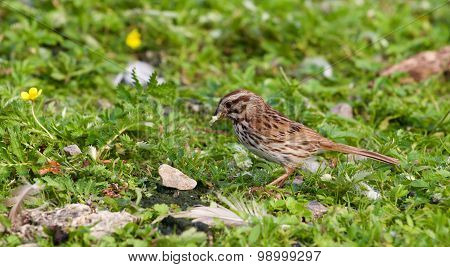 The Beautiful Close-up Of The Sparrow With The Food
