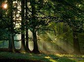 Постер, плакат: солнце и туман в лесу
