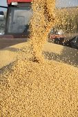 foto of auger  - Pouring soy bean into tractor trailer from grain auger of combine - JPG