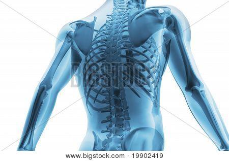 Skeleton Of The Man