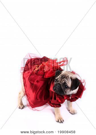 Lady Mop Wearing Red Dress And Looking Left