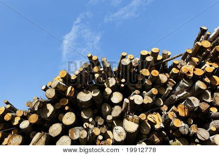 woodpile and sky