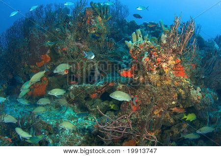 Repisa de coral