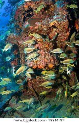 Agregación de peces en un naufragio