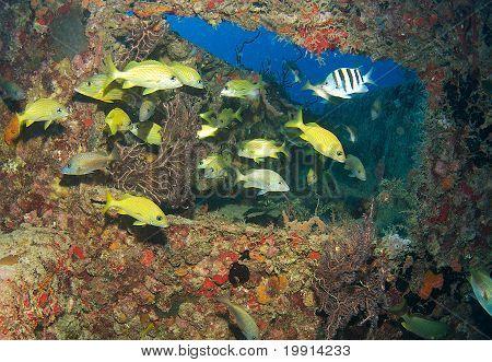 Agregación de peces