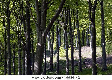 Teil des Danish Forest