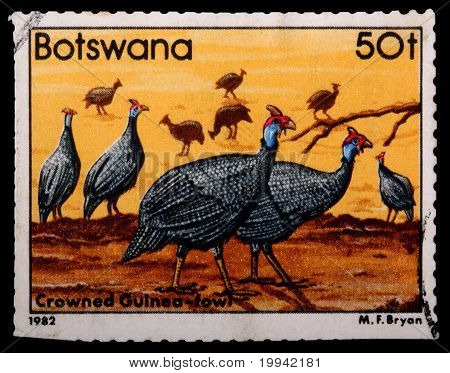 Circa 1982: A 50-thebe Stamp Printed In Botswana Shows A Flock Of Crowned Guinea Fowl Birds, Circa 1