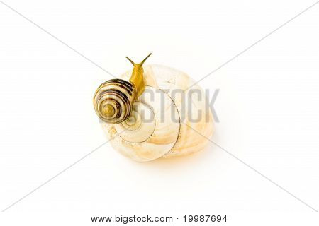 Snail Climbs To Bigger And Nicer House
