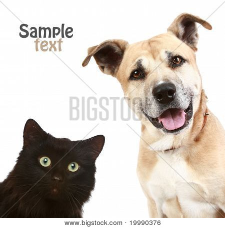 Cat And Dog On White