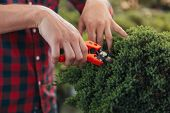 Selective Focus Of Gardener Cutting Bush With Pruning Shears In Garden poster