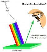 How we See Green Color infographic diagram showing visible spectrum light on surface and colors refl poster