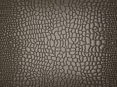 stock photo of crocodilian  - Grey Alligator skin - JPG